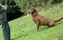 Εικόνα για την κατηγορία Εκαπαίδευση Σκύλων