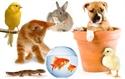 Εικόνα για την κατηγορία Pet Shop
